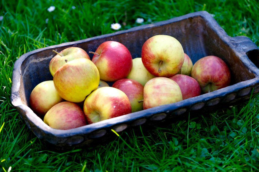 schale mit Äpfeln
