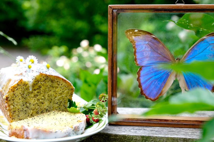 Zitronen-Mohnkuchen und Schmetterling