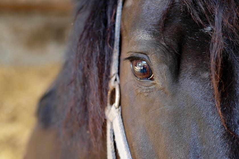 Rappe Detail vom Auge