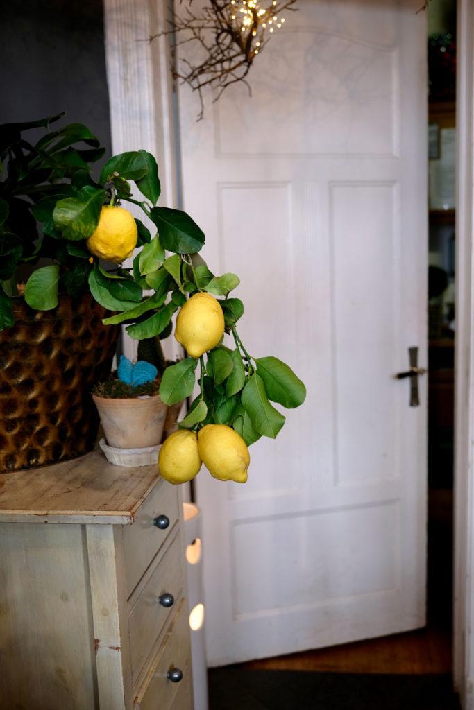 Aus Liebe zu Blumen – zu Besuch im Blumenladen. Ein Porträt über Claudia Lange und ihre Küchenblume und eine Liebeserklärung an das Handwerk.