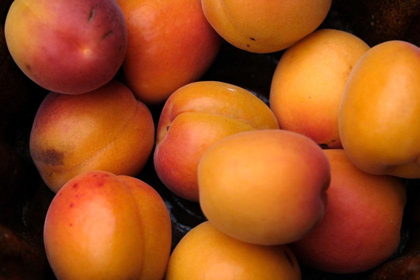 Früchte der Sonne: Aprikosen!