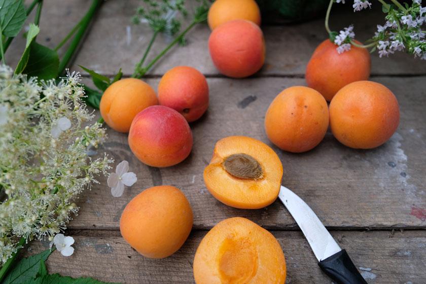 Torte aus frischen Aprikosen und Thymian –ein saftiges Vergnügen