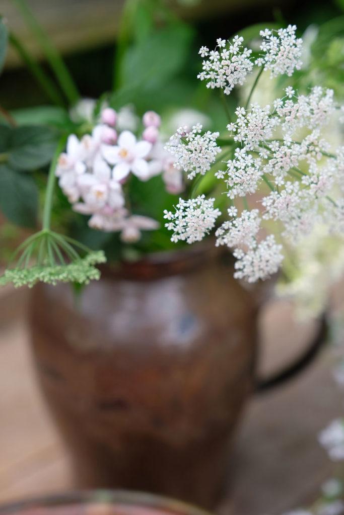 Blühender Giersch auf der Kaffeetafel. Es gibt Aprikosentafte mit Thymian!