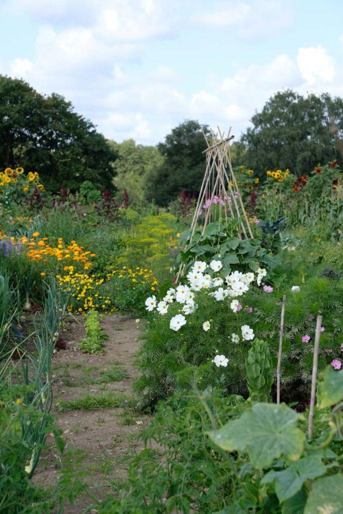 Gemüsebeet zum Mieten –Entspannung, Entschleunigung und Inspiration