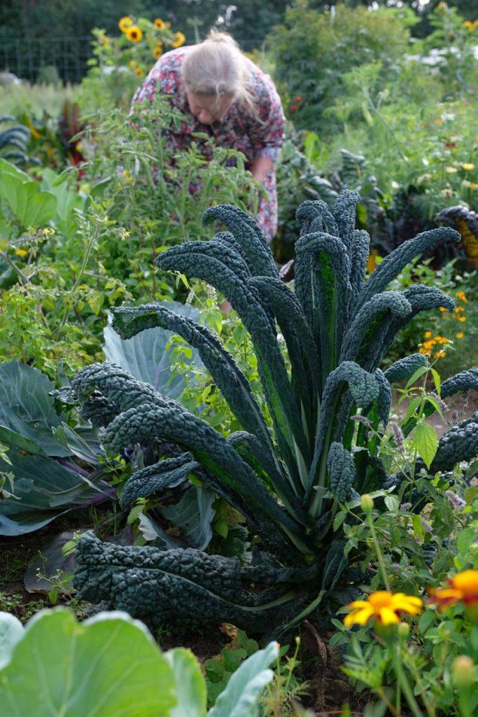 Arbeit im Gemüsegarten zum Mieten