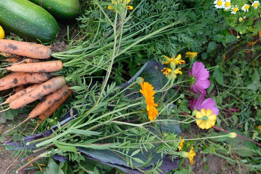 Gemüse aus dem Mit-Gemüsegarten