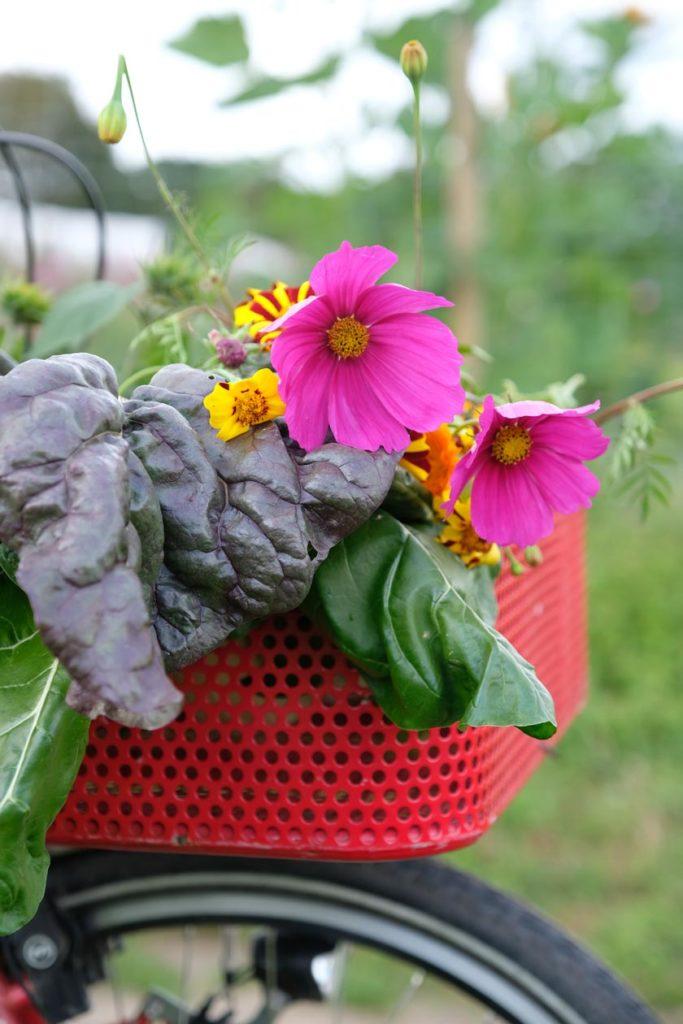 Blumen und Gemüse aus dem Garten