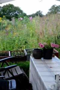 Gut Wolfsdorf: Gemüsebeet zum Mieten