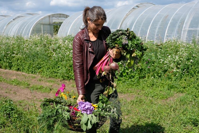 Reiche Ernte aus dem Gemüsegarten