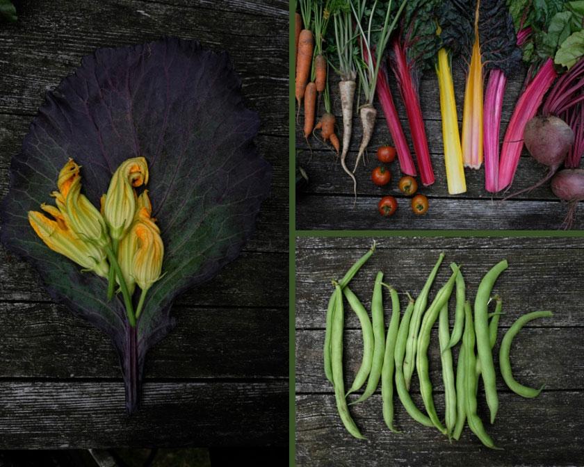Buntes Gemüse aus dem Mietgarten
