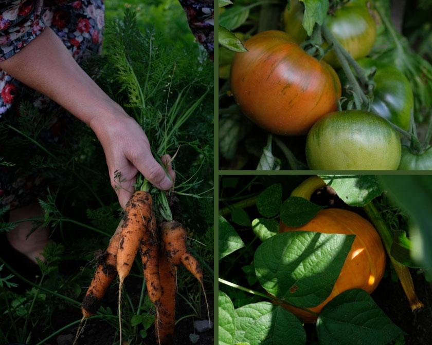 Gemüsegarten zum Mieten