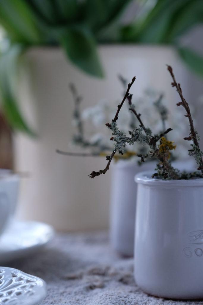 Winterweiß: Zweige mit Flechten besetzt