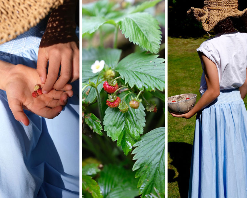 Windbeutel mit Erdbeeren, Aprikosen und Brombeeren