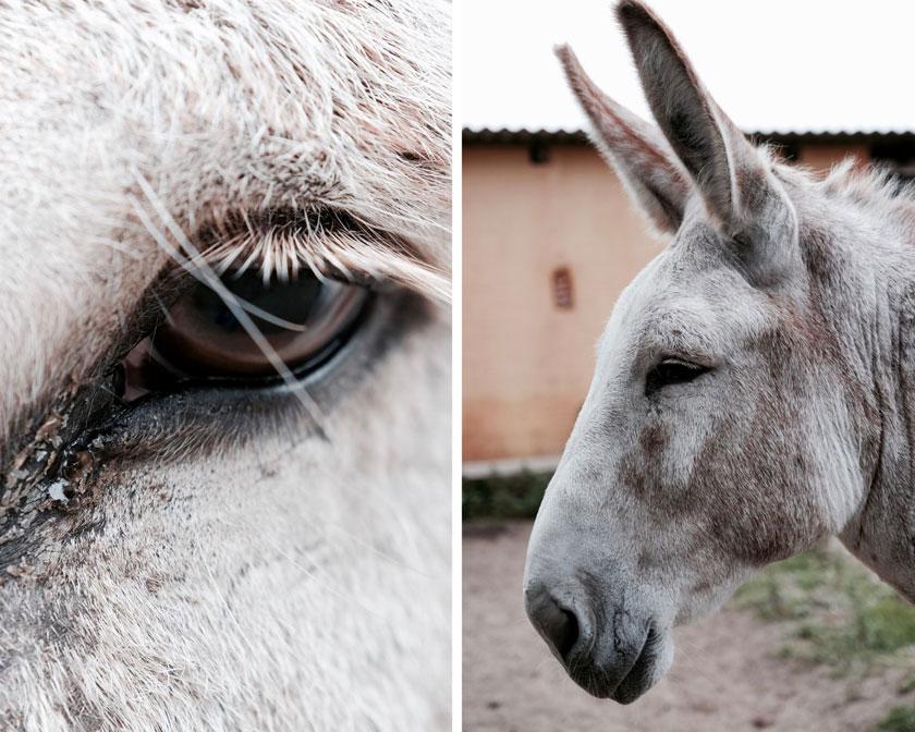 Esel – freundlich, würdevoll und klug