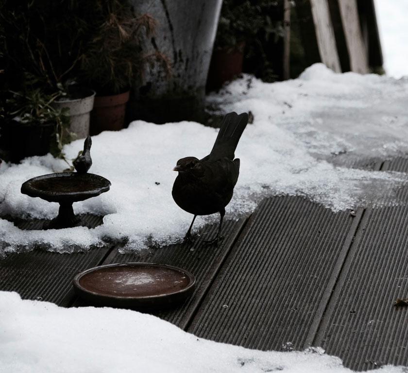 Vogelfutter aus eigener Produktion. Für glückliche Wintervögel