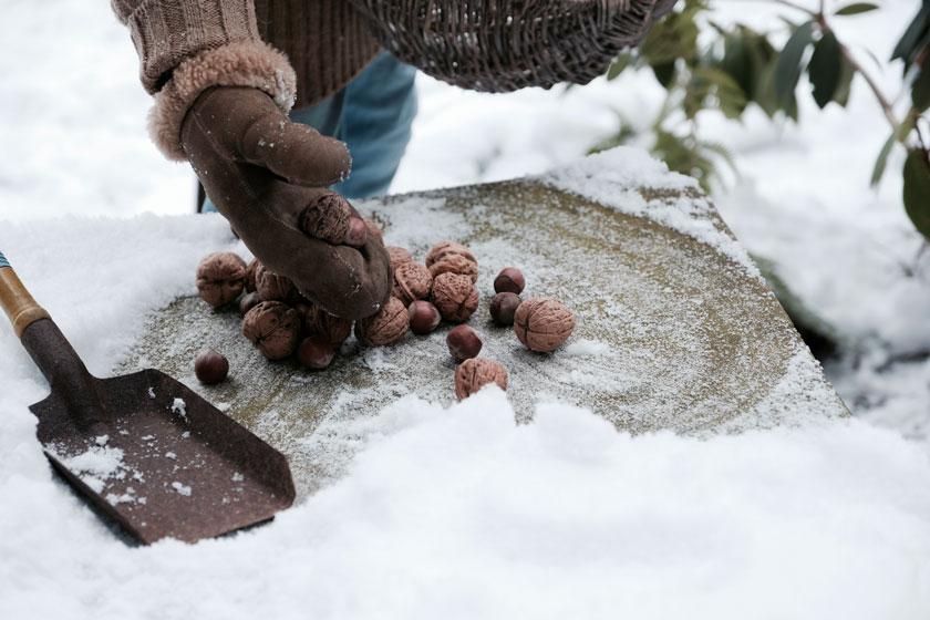 Nüsse helfen Eichhörnchen über den Winter