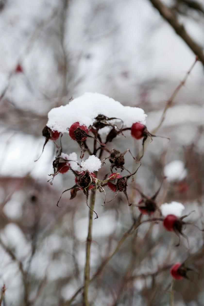 Futter für Wintervögel selber machen
