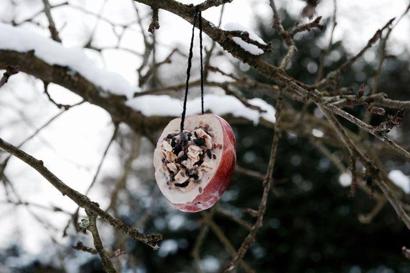 Winterküche: Wir bereiten Vogelfutter für die Wintervögel zu